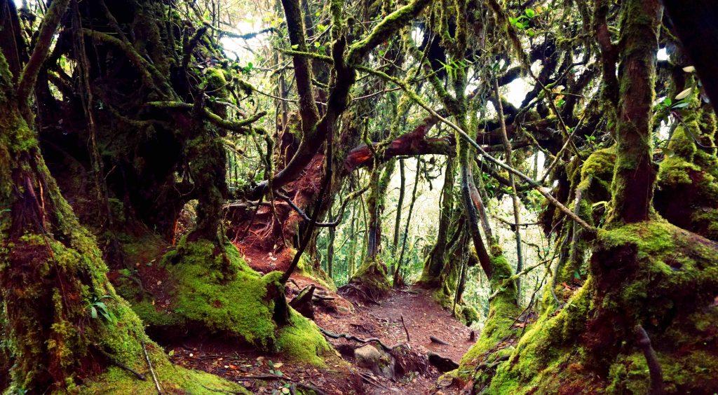 malesia foreste cameron highlands