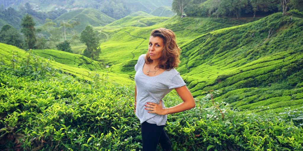 malesia-cameron-highlands-te-farm