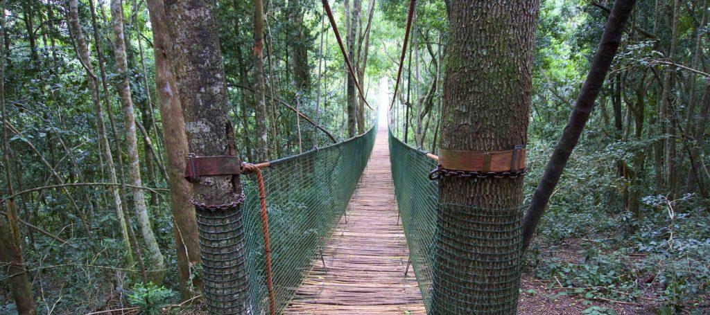 foreste sudafrica ponte sospeso